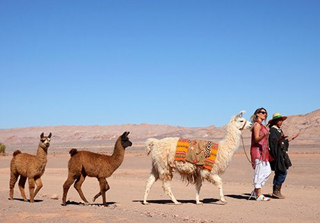 Atacama & Altiplano