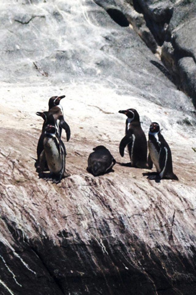 Penguin Island Tour
