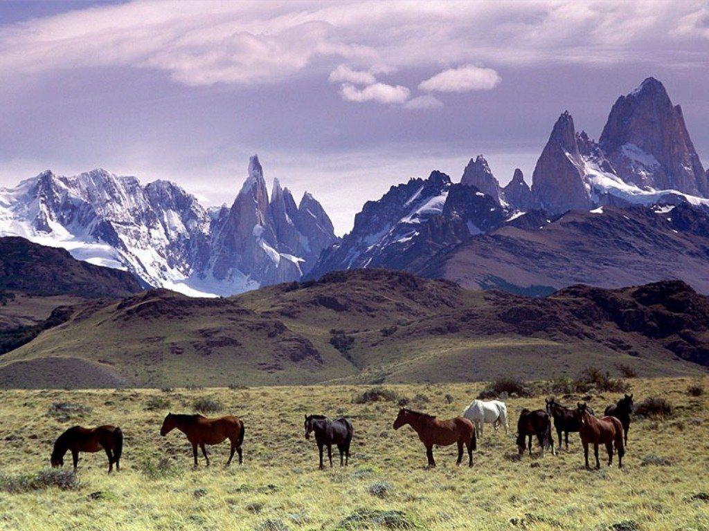 Chilean Horses Yendegaia