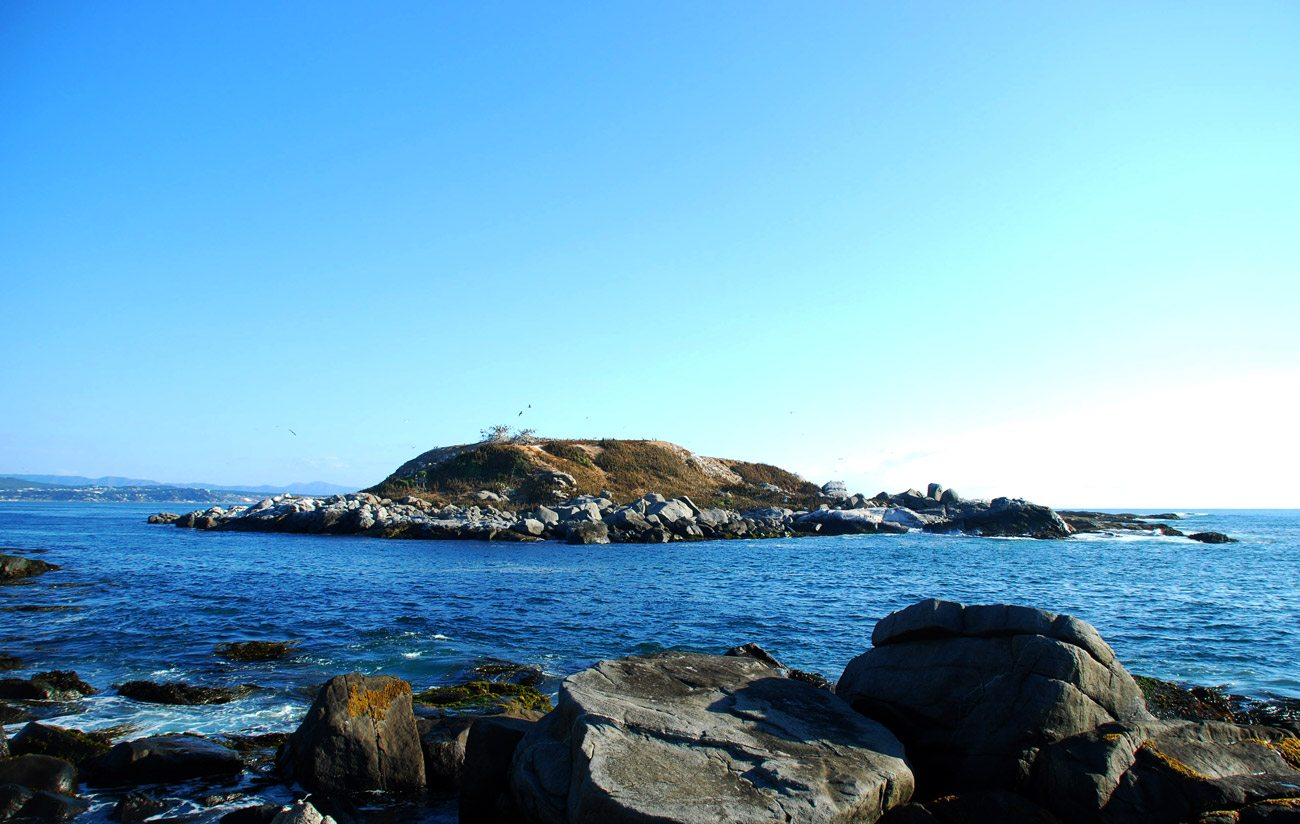 Cachagua, Zapallar & Penguin Island