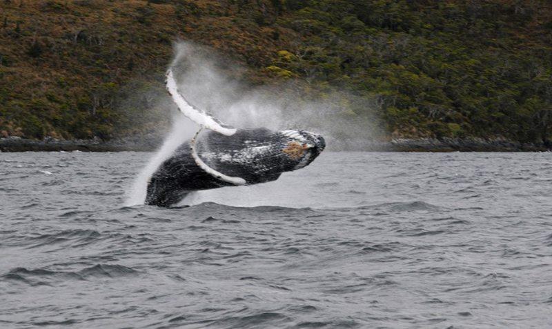 Photo: feel patagonia