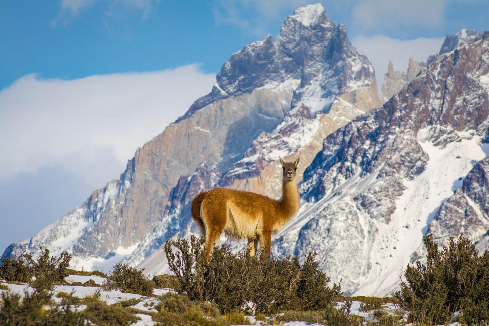 Adios Torres del Paine!