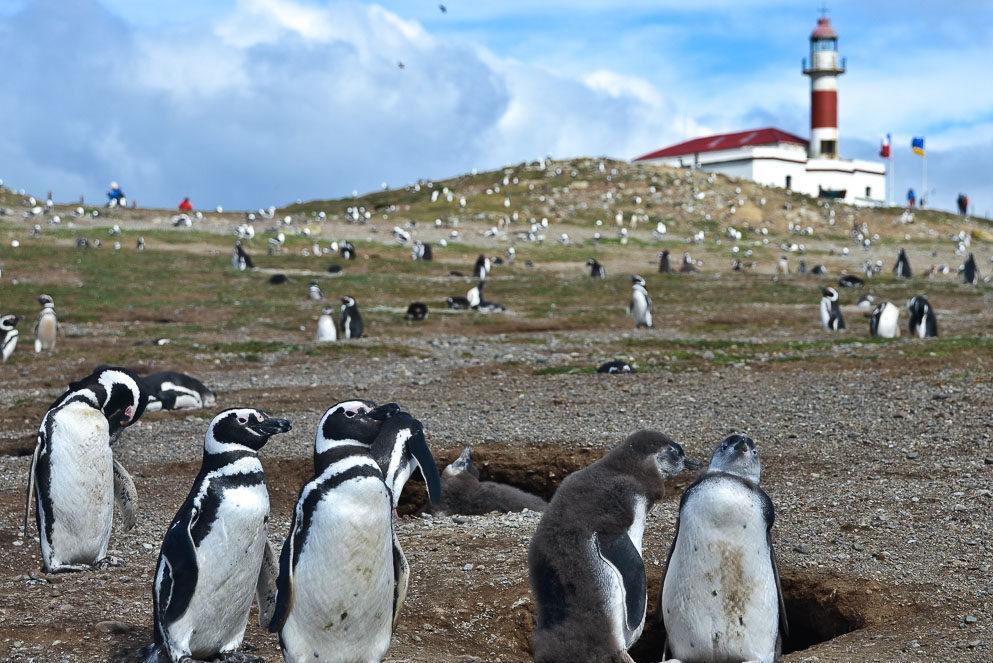 Isla Magdalena y Parque Nacional Torres del Paine